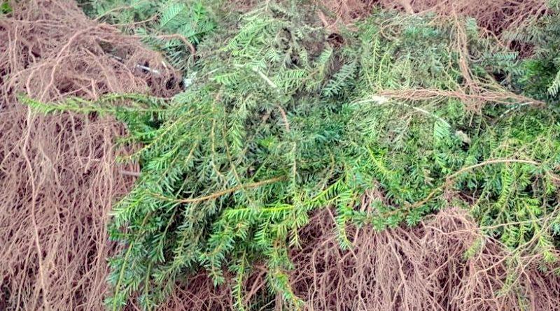 Plant nu wortelgoed: goedkope planten uit volle grond
