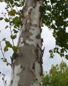 Opvallende stammen bomen stadstuin
