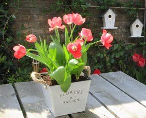 Hoe plant je bloembollen? - Hoe diep plant je bloembollen en hoe ver uit elkaar?