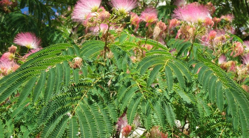Mag je planten meenemen van vakantie?