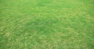 Kan je het gras maaien bij droogte?