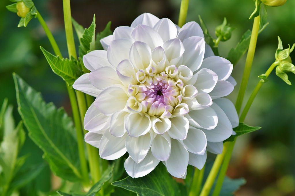 Wanneer plant je zomerbloeiende bloembollen?