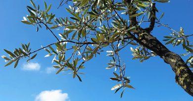 Welke bomen blijven groen in de winter - welke bomen zijn wintergroen?