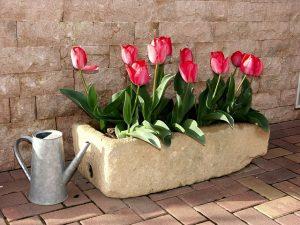 Hoe diep bloembollen planten en hoeveel bloembollen in een pot?