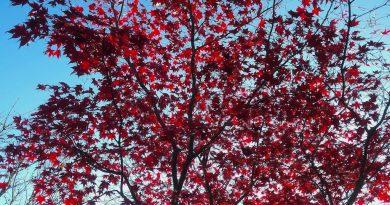 Herfst kleuren in de kleine tuin