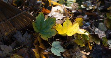 Wat is bladcompost en hoe maak je zelf bladcompost?