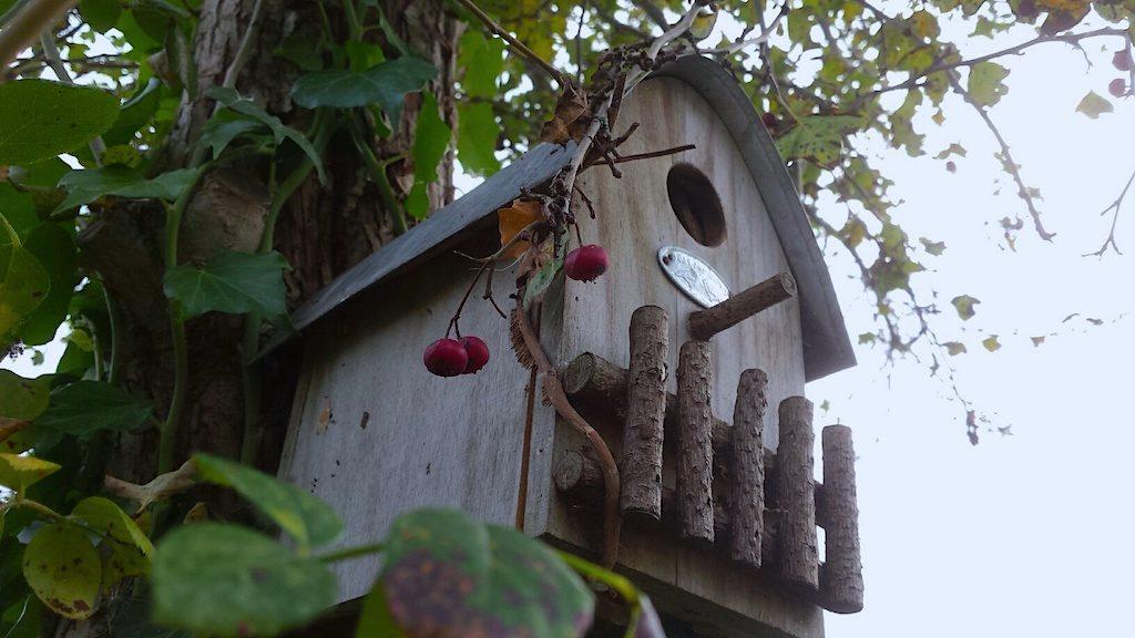 Maak een nestkast, zodat vogels kunnen broeden in je tuin