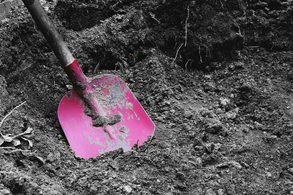 Wanneer is de beste tijd om bomen en heesters te verplanten?