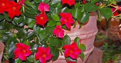 Vanaf wanneer mogen vorstgevoelige planten weer naar buiten? - Kuipplanten