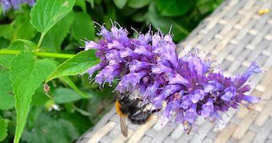 Zo krijg je meer bijen in de tuin