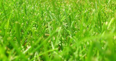 Gazon aanleggen? Gras zaaien of graszoden leggen