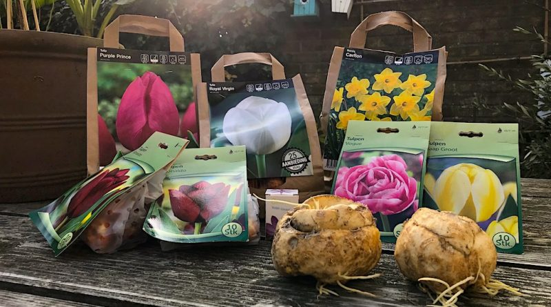 alles over bloembollen (kopen en planten)