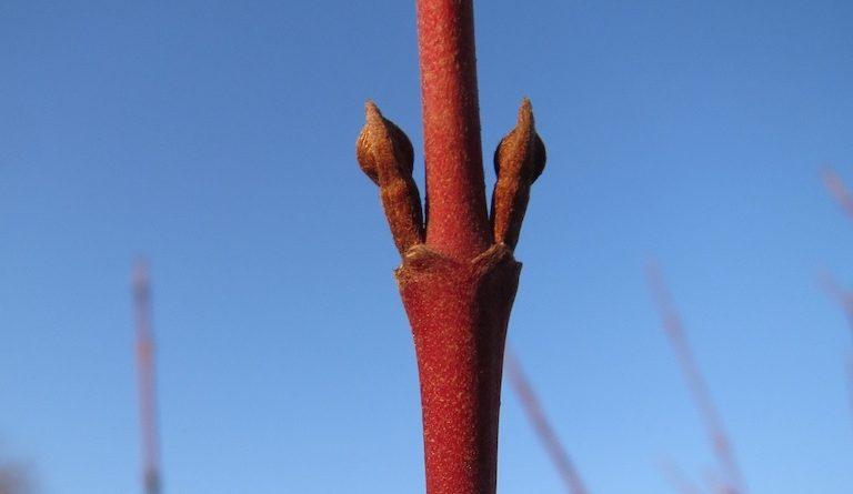 Makkelijke planten voor Winterstekken of houtstekken