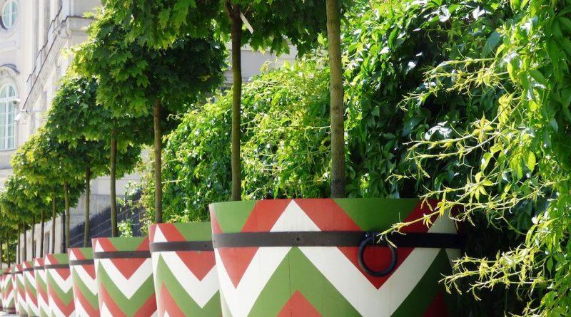 Tips voor bomen in potten