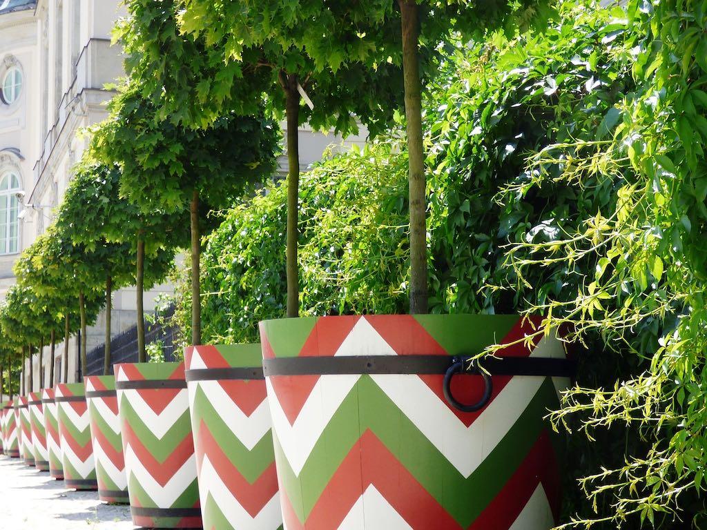 Tips voor bomen in potten en plantenbakken