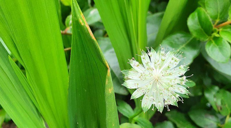 Tuinieren op klei - Welke planten zijn geschikt voor kleigrond?
