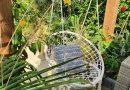 Zomer in onze eigen kleine tuin