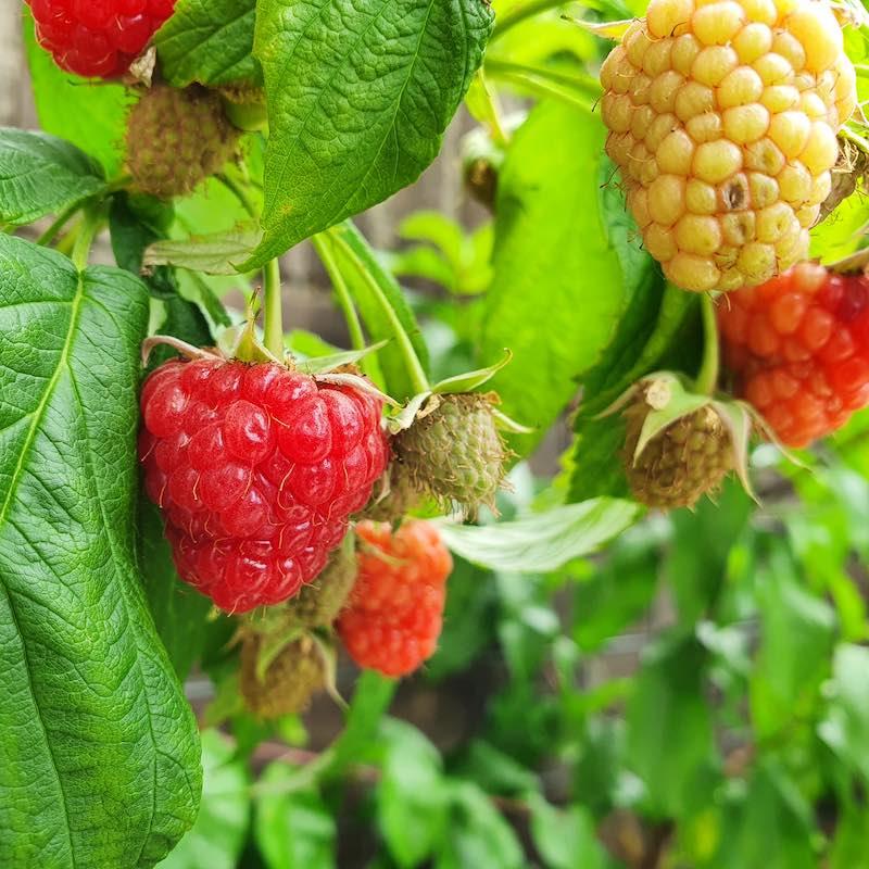 Groenten, kruiden en fruit in pot