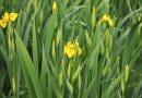 Welke planten kunnen goed tegen vochtige of natte grond?