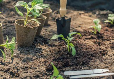 Tuinieren met een klein budget: Tips voor gratis en goedkope planten