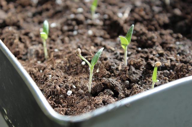 Koop of verzamel zaden. Tuinieren met een klein budget: Tips voor gratis en goedkope planten