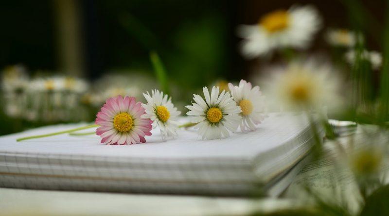 Tuinblogs en Tuinwebsites - Een overzicht van tuinieren websites