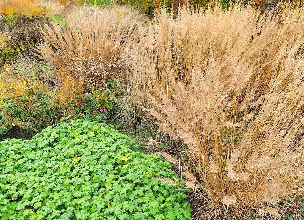 Tips voor een beter beplantingsplan - gebruik de seizoenen!