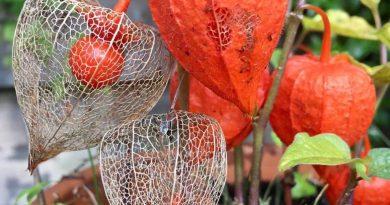 Lezersfoto's - Herfstkleuren in de kleine tuin