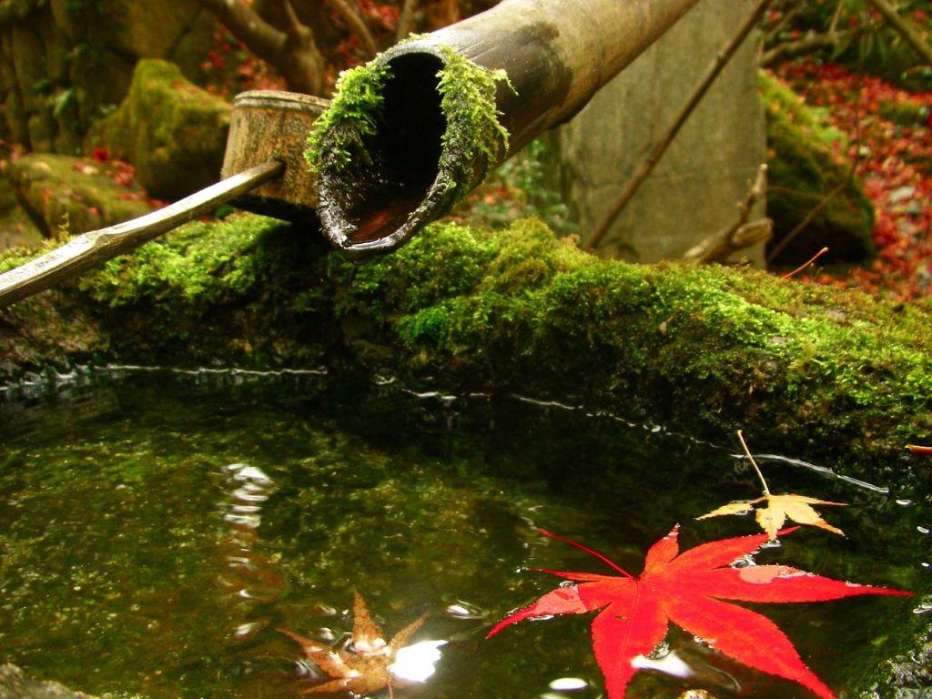 Planten voor Japanse tuin of Oosterse tuinstijl