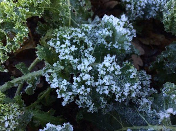 Deze groenten kan je in de winter zaaien