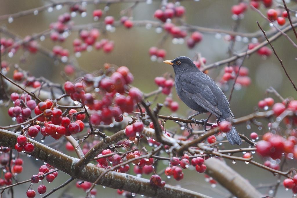 Meer vogels in de tuin: zo doe je dat!