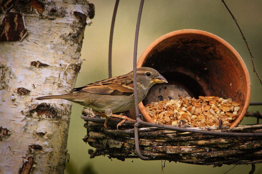 Bijvoeren is de makkelijkste en snelste manier voor meer vogels in je tuin