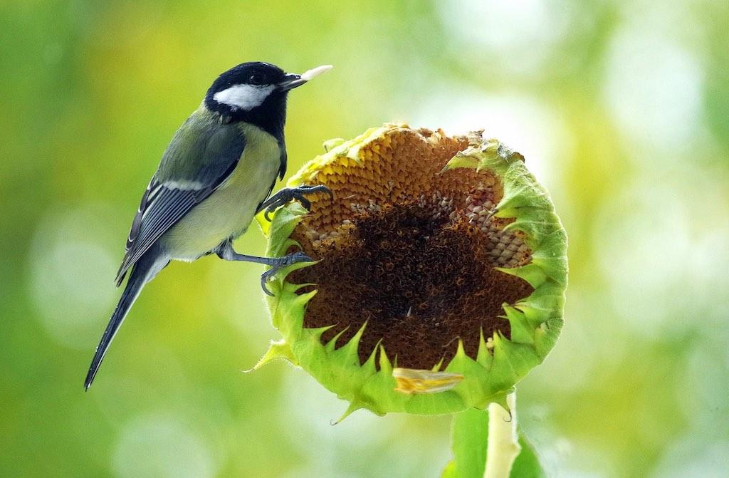laat zaden en zaaddozen staan voor de vogels