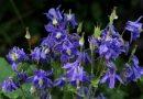Welke planten kunnen in de schaduw, die ook bloeien?