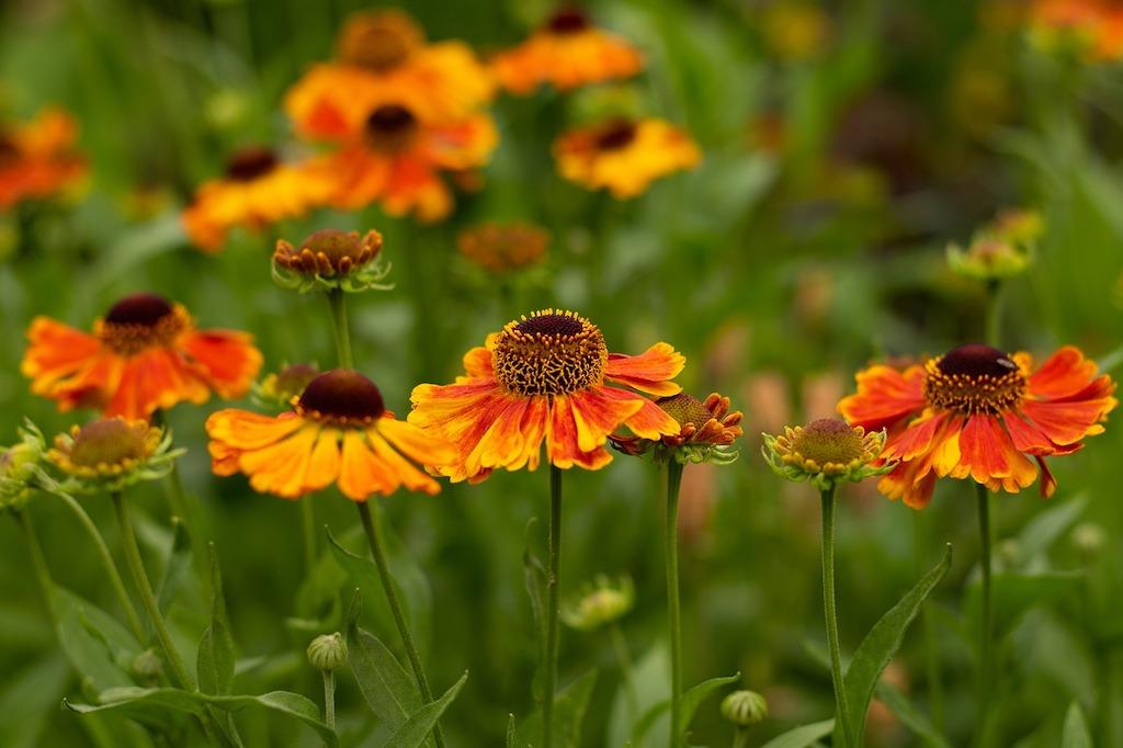 Oranje bloemen - van Achillea tot Zinnia