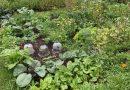 Juli in de moestuin: dit kun je nog zaaien en uitplanten
