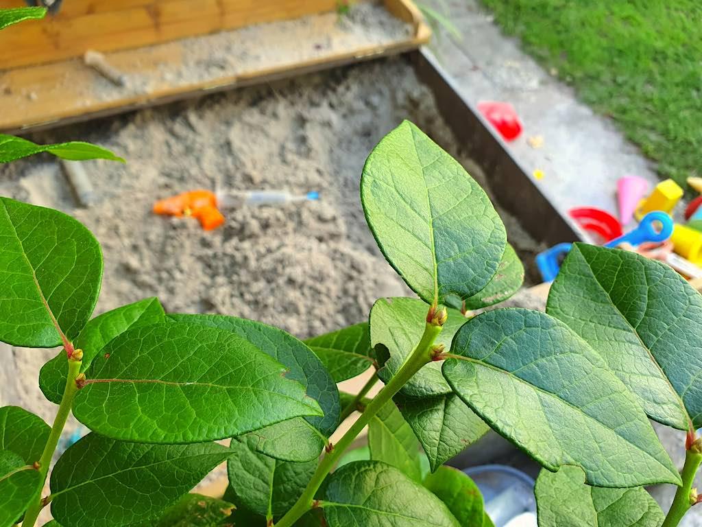 kindvriendelijke en veilige tuin