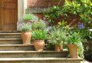 Onze toptips voor Planten in pot