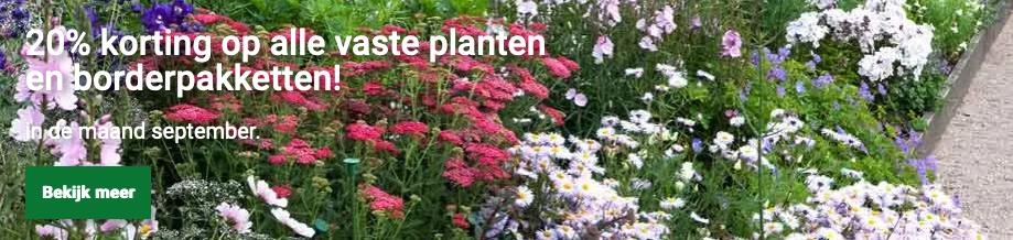 De hele maand september 20% korting op alle vaste planten bij Directplant.nl