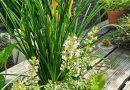 Online planten kopen