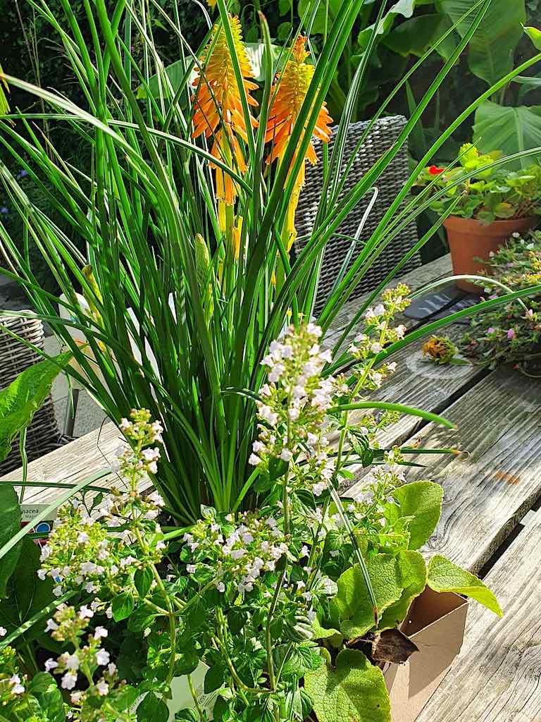 Online planten bestellen en planten via internet laten bezorgen