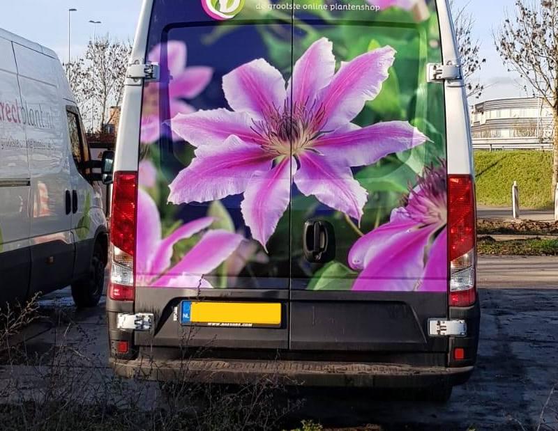Online planten bestellen en planten kopen via internet: hier moet je op letten